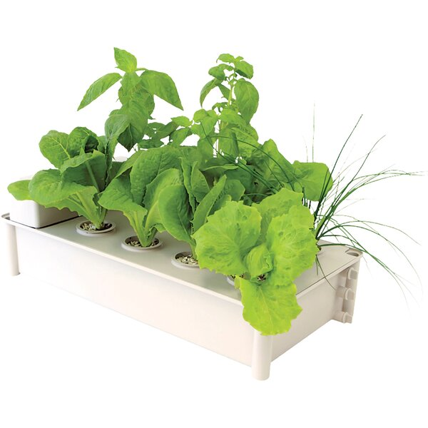 Salad Box Garden Hydroponic Unit by Hydrofarm
