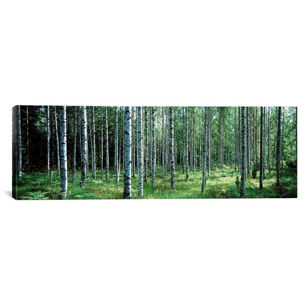 Panoramic White Birches Aulanko National Park Finland Photographic Print on Wrapped Canvas by iCanvas