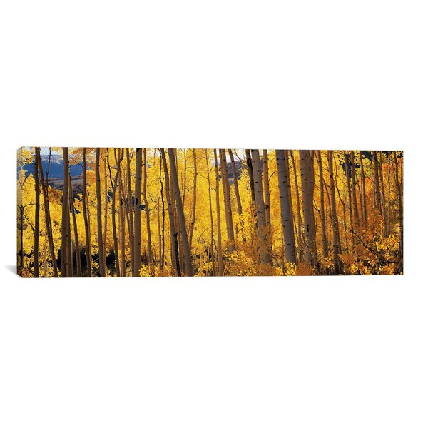 Panoramic Aspen Trees Photographic Print on Canvas by iCanvas