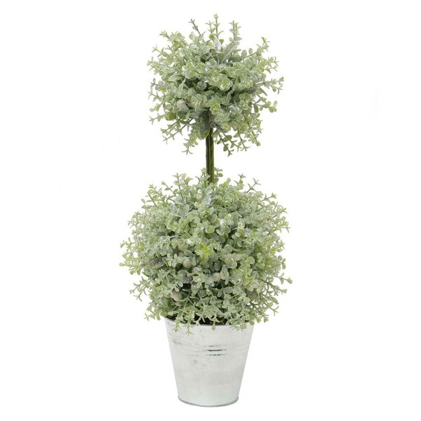 Mistletoe Privet Succulent Plant Topiary by The Holiday Aisle