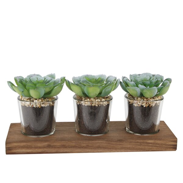 Desktop Succulent Plant in Pot Set by Wrought Studio