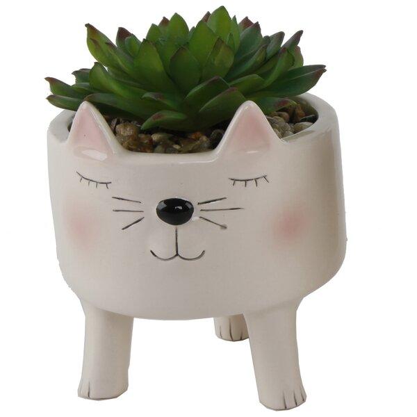 Cute Boy Cat Desktop Succulent Plant by Ebern Designs