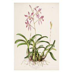 Vintage Botanical 'V' by Julia Kearney Graphic Art Print by Evive Designs