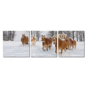 Baxton Studio Horse Herd Mounted 3 Piece Framed Photographic Print on Wrapped Canvas Set by Wholesale Interiors