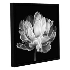 'Tulipa Double Black And White II' by Cora Niele Graphic Art on Wrapped Canvas by ArtWall
