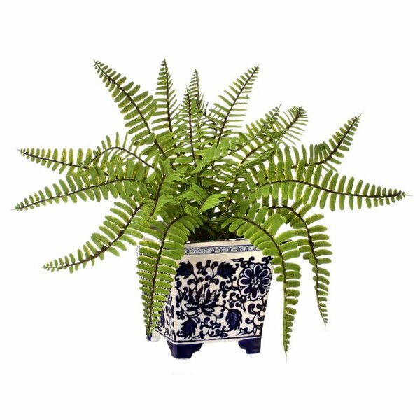 Fern Plant in Pot by Three Posts