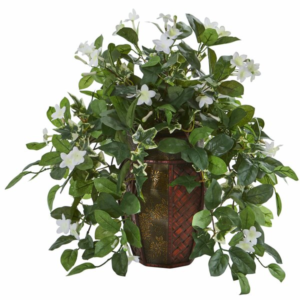 Stephanotis and Ivy Desktop Foliage Plant in Planter by World Menagerie
