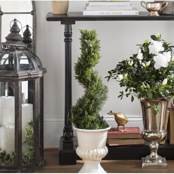 Cedar Spiral Round Topiary in Urn by Ophelia & Co.