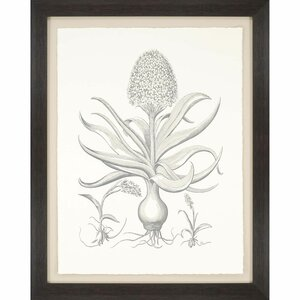 Hyacinthus Framed Painting Print by Paragon