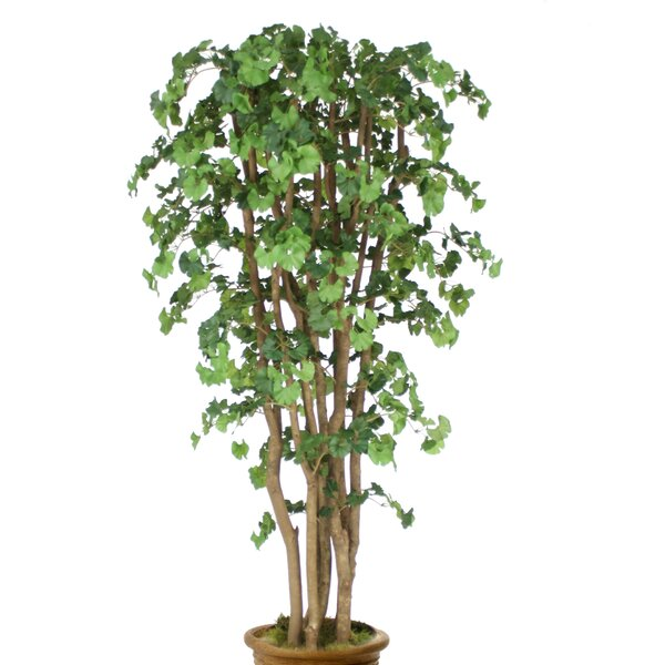 Ginkgo Tree in Planter by Distinctive Designs