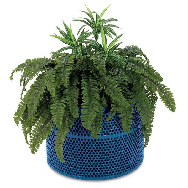 Rally Plastic Pot Planter by Anova