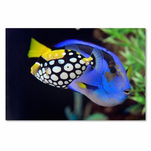'Colorful Tropical Fish' by Kurt Shaffer Photographic Print Wrapped Canvas by Trademark Fine Art