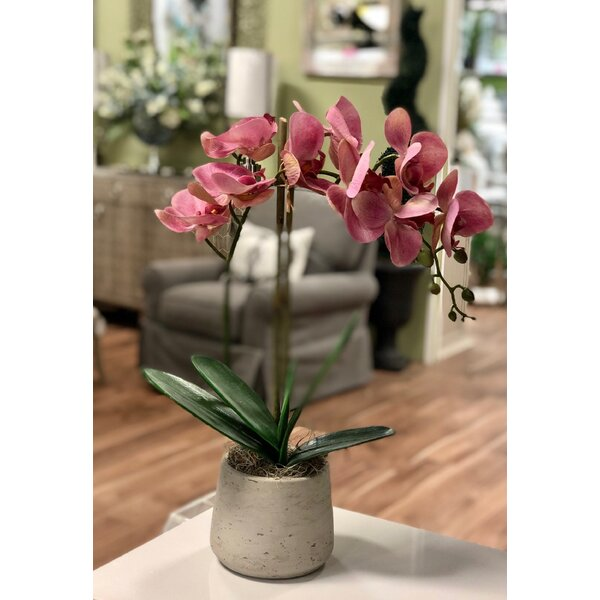 Orchid Bouquets And Arrangements Hgtv
