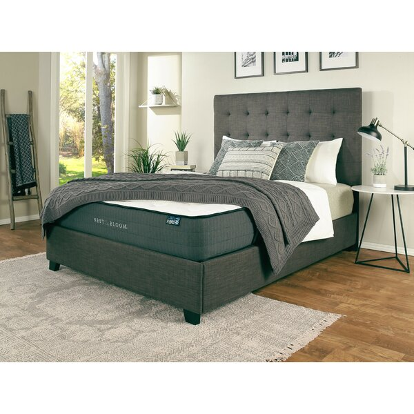 Almendarez Upholstered Platform Bed with Mattress by Darby Home Co