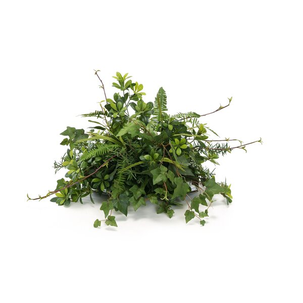 Topper with Silk Pittosporum, Ivy and Twigs Desk Top Plant on Tray by Distinctive Designs