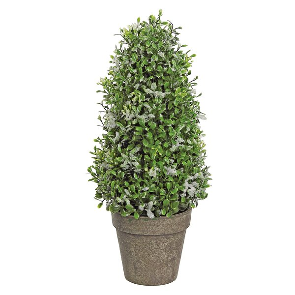 Snowy Boxwood Cone Topiary by Charlton Home