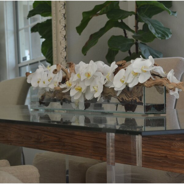 Phalaenopsis and Driftwood Orchids Centerpiece in Planter by Rosecliff Heights