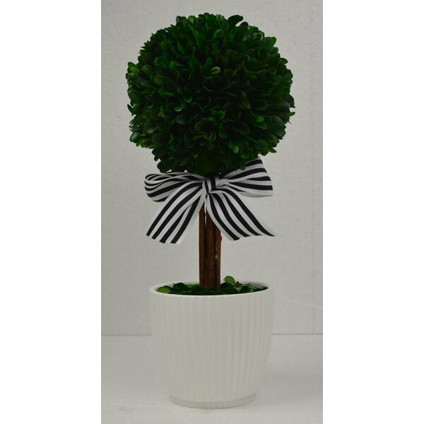 Ball Boxwood Topiary in Pot by GT DIRECT CORP