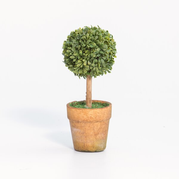 Hesson Mini Single Desktop Boxwood Topiary in Pot (Set of 12) by Charlton Home