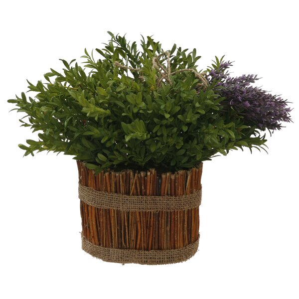 Round Boxwood and Lavender Floral Arrangement in Planter (Set of 2) by Jane Seymour Botanicals