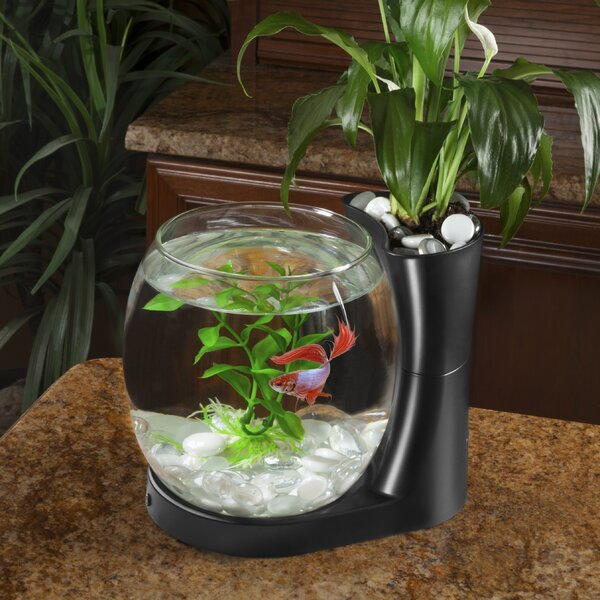Gordie 0.75 Gallon Betta Planter Aquarium Bowl by Archie & Oscar