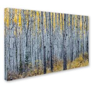 Forest of Aspen Trees by Pierre Leclerc Photographic Print on Wrapped Canvas by Trademark Fine Art