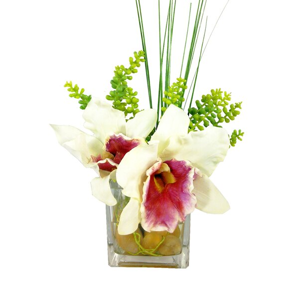 Cattleya Cube Orchid Floral Arrangement in Vase by Bloomsbury Market