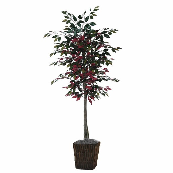 Capensia Tree in Square Willow by The Holiday Aisle