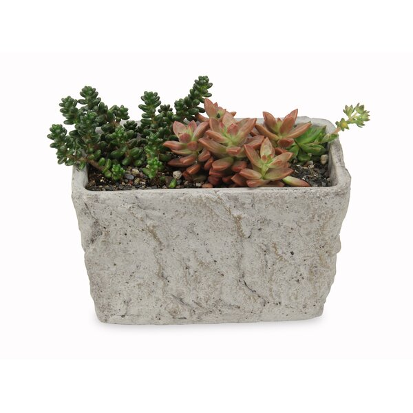 Remy Rectangular Concrete Pot Planter by Bloomsbury Market