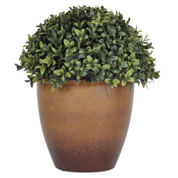 Half Ball Topiary with Brown Ceramic Planter by House of Silk Flowers Inc.