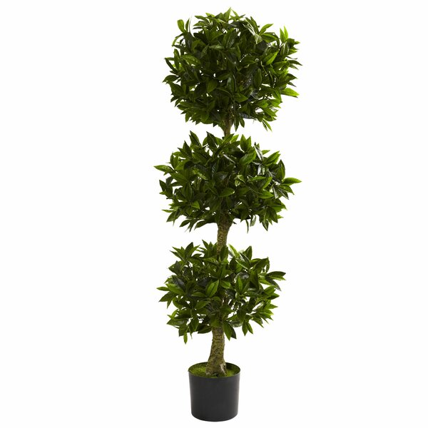 Triple Bay Leaf Round Topiary in Pot by Darby Home Co