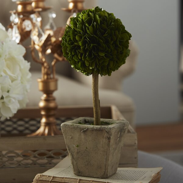 Boxwood Round Tapered Topiary in Planter by Ophelia & Co.