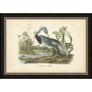 'Audubon's Louisiana Heron' Framed Painting Print by Ashton Wall Décor LLC