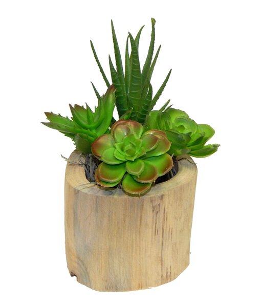 Succulent Garden Plant in Wooden Vase by Wrought Studio