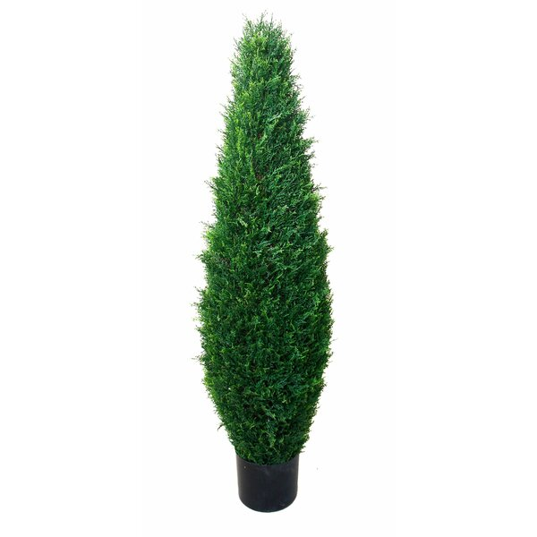 Cypress Tree in Pot by Darby Home Co