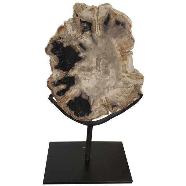 Fossil with Stand Sculpture by Noir