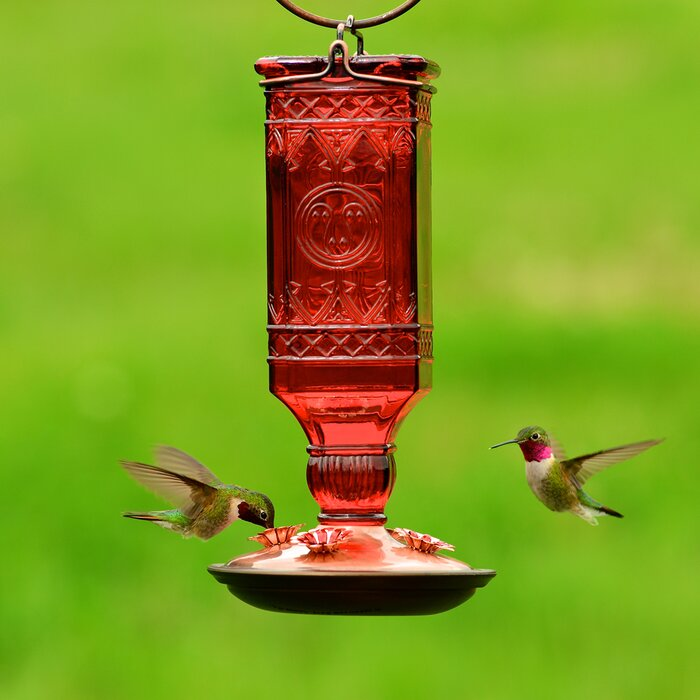 feeders answered photo woodpecker the hummingbird attracting humming hummingbirds by feeder at b birding bird questions lisa reader pros about birds bellando