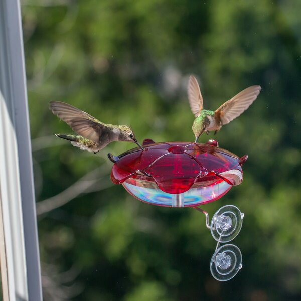 Ruby Sipper® Window Hummingbird Feeder by Droll Y