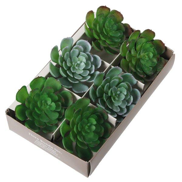 6 Piece Napkin Ring Succulent Desktop Plant Set by Bungalow Rose