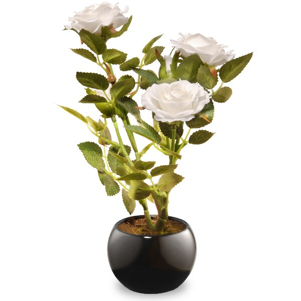 Rose Floral Arrangement in Pot by National Tree Co.