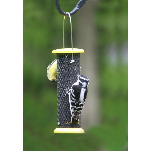 Low Cost Nyjer/Thistle Feeder by Birds Choice
