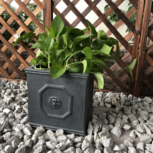 Oundle Lion Head Square Planter Box by Charlton Home