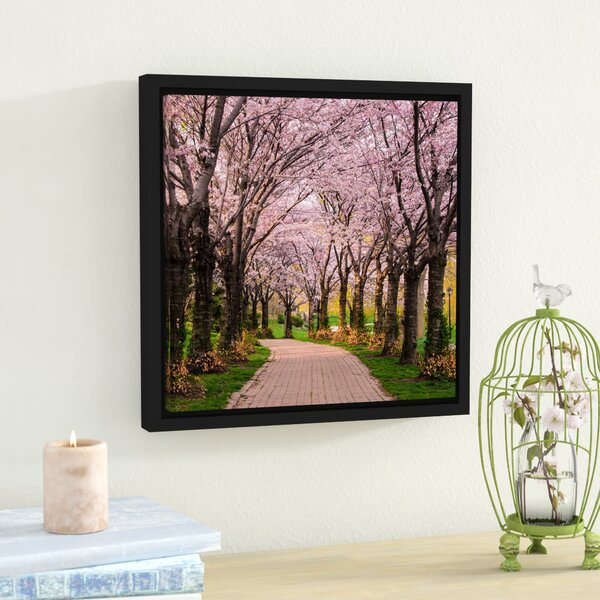 Cherry Blossom Trail Framed Photographic Print by Lark Manor