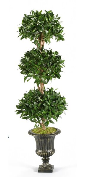 Bayleaf Topiary in Urn by Fleur De Lis Living