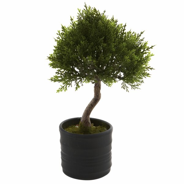 Cedar Bonsai Tree in Planter (Set of 2) by Charlton Home