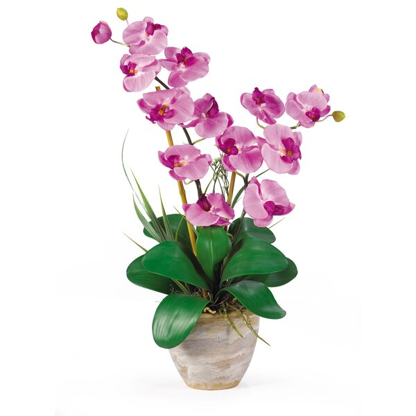 Double Phalaenopsis Silk Orchid Flower in Mauve by Nearly Natural