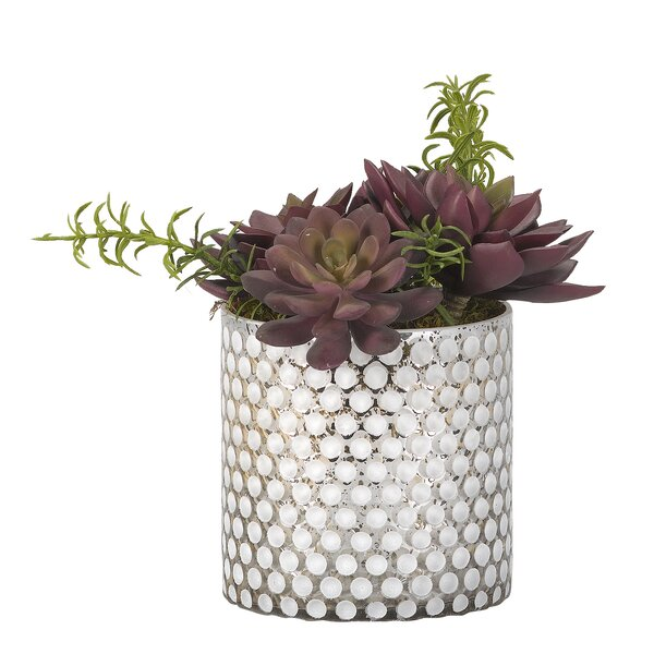 Desktop Succulent Plant in Glass Vase by Brayden Studio
