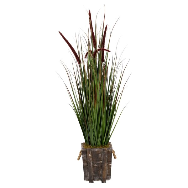 Mixed Grass in Planter by Rosecliff Heights