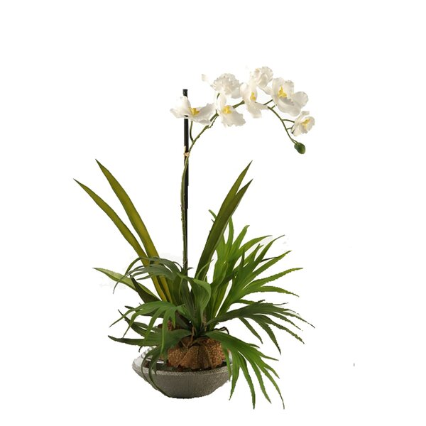 Mini Staghorn Fern with Vanda Orchid in Ceramic Planter by Bay Isle Home