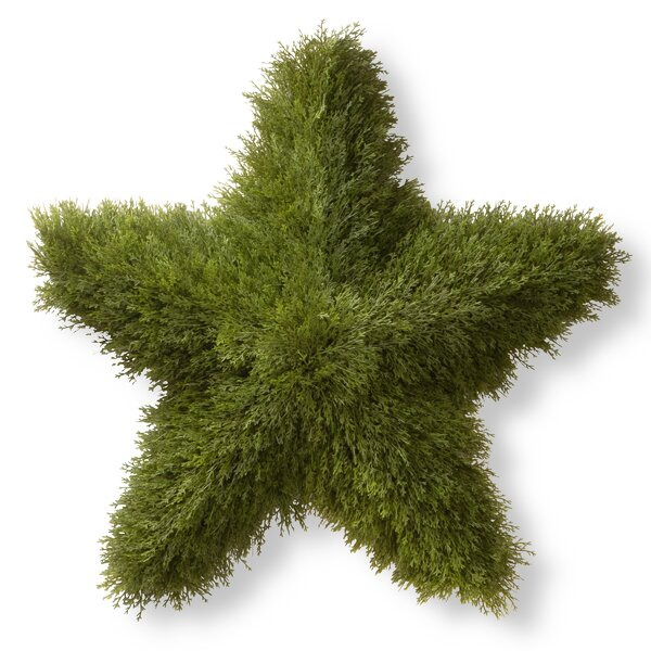 Juniper Star Topiary Statue by National Tree Co.